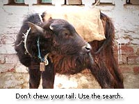 Don't chew your tail!